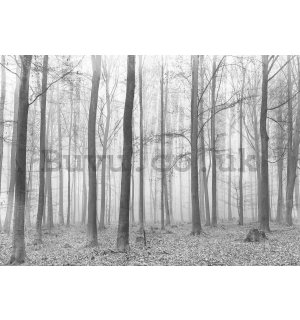 Wall mural vlies: Fog in the forest (2) - 254x368 cm