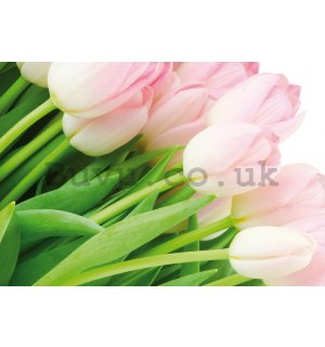Wall Mural: Bunch of tulips - 184x254 cm