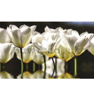 Wall Mural: White tulips (2) - 184x254 cm