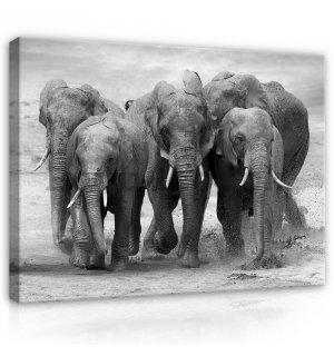 Painting on canvas: Elephants - 75x100 cm