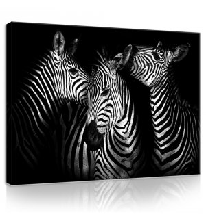 Painting on canvas: Zebra (4) - 75x100 cm