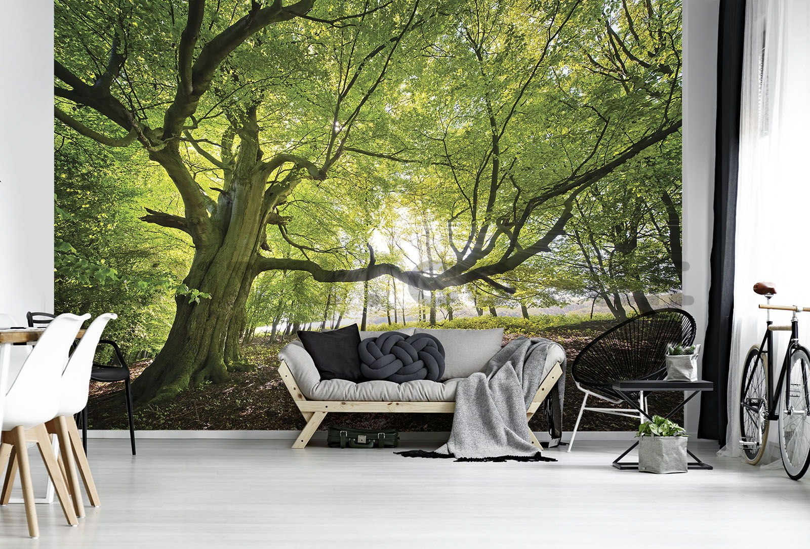 Wall mural vlies: Sun in the Forest (5) - 254x368 cm