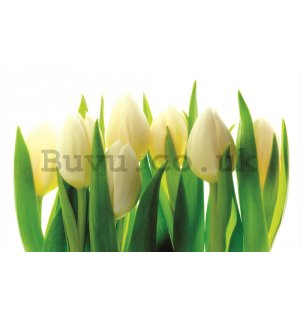 Wall Mural: White tulips (1) - 184x254 cm
