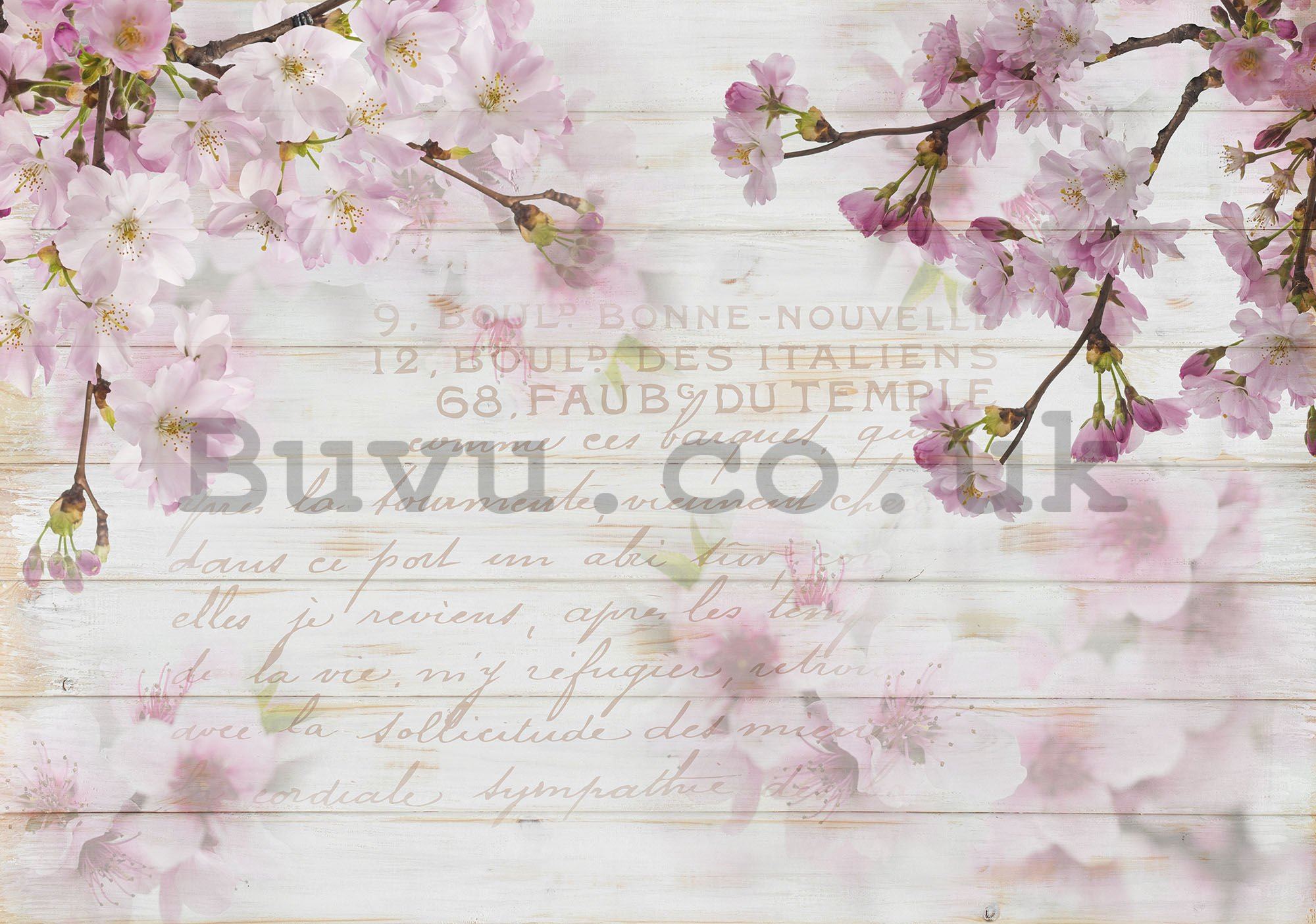 Wall mural vlies: Cherry blossoms (1) - 254x368 cm