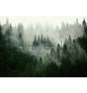 Wall mural: Fog over the forest (1) - 254x368 cm
