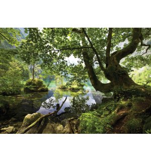 Wall Mural: Forest pool - 184x254 cm