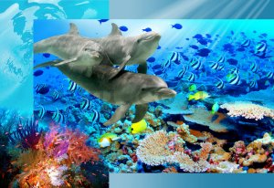 Wall Mural: Undersea world - 184x254 cm