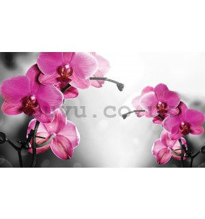 Wall mural vlies: Orchid on grey background - 416x254 cm