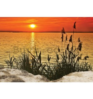 Wall mural vlies: Coastal Grass (2) - 416x254 cm