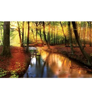 Wall mural vlies: Forest brook (2) - 416x254 cm