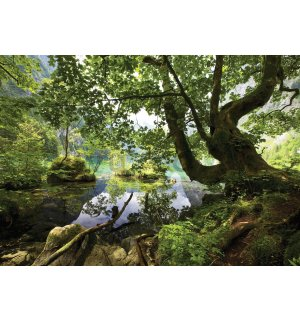 Wall mural vlies: Forest pool - 416x254 cm