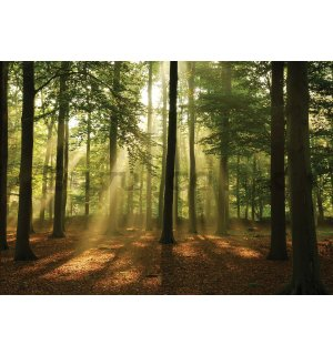 Wall mural vlies: Sun in the Forest (4) - 416x254 cm