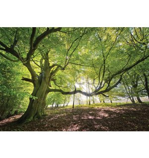 Wall mural vlies: Sun in the Forest (5) - 416x254 cm