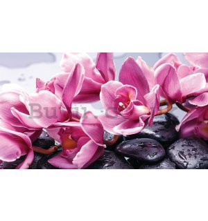 Wall mural vlies: Spa stones and pink orchids - 416x254 cm