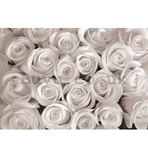 Wall mural vlies: White Rose - 416x254 cm