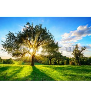 Wall mural vlies: Sun behind the tree - 416x254 cm