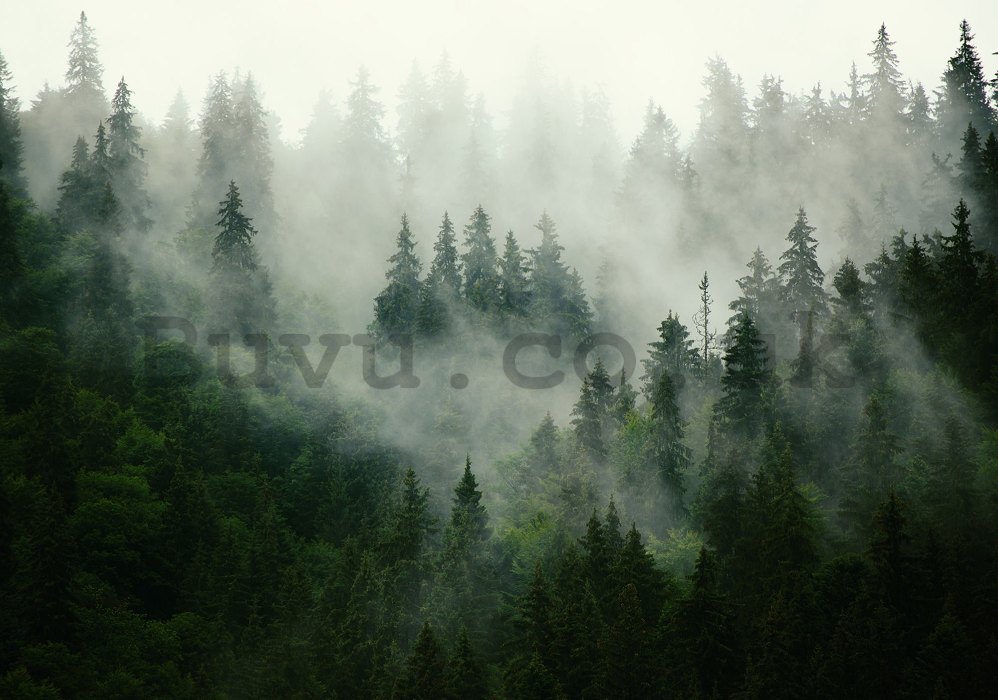 Wall mural vlies: Fog over the forest (1) - 416x254 cm