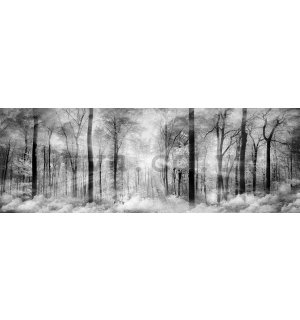 Wall mural: Black and white forest - 624x219 cm