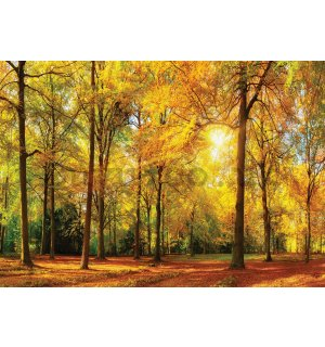 Wall mural: Fallen leaves in the forest - 184x254 cm