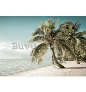 Wall mural vlies: Coast with palm tree - 184x254 cm
