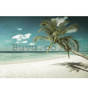 Wall mural vlies: Palm tree over the sea - 184x254 cm