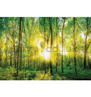 Wall mural vlies: View through the forest - 184x254 cm