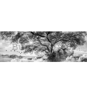 Wall mural: Black and white nature - 624x219 cm