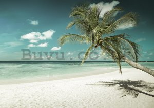 Wall mural: Palm tree over the sea - 104x152,5 cm