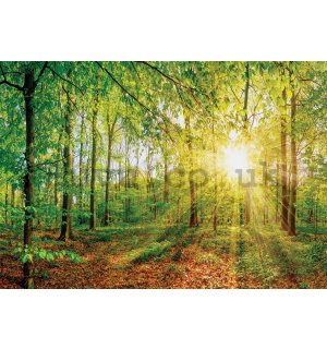Wall mural vlies: View of the forest - 416x254 cm