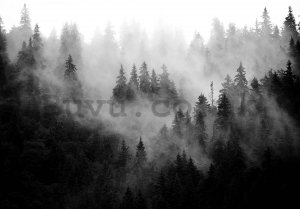 Wall mural vlies: Fog Over Forest (Black & White) - 416x254 cm
