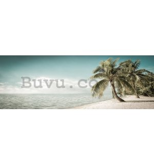 Wall mural: Coast with palm tree - 624x219 cm