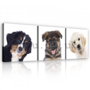 Painting on canvas: Dogs - set 3pcs 25x25cm