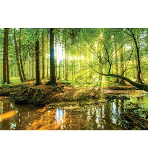 Wall mural: Forest brook (2) - 368x254cm