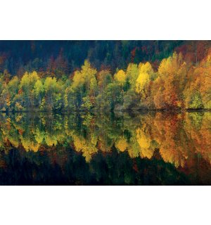 Wall mural: Autumn forest and lake - 368x254cm