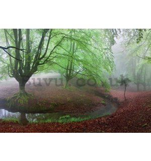 Wall mural: Forest in fog (1) - 368x254cm