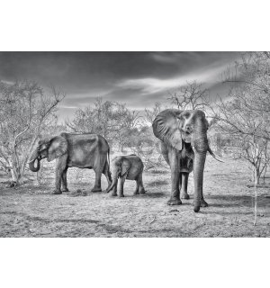 Wall mural: Black and white elephants - 368x254cm