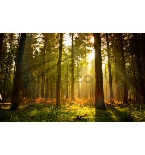 Vlies wall mural: Forest sunrise - 312x219cm