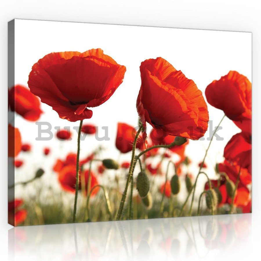 Painting on canvas: Poppy Poppies - 75x100 cm
