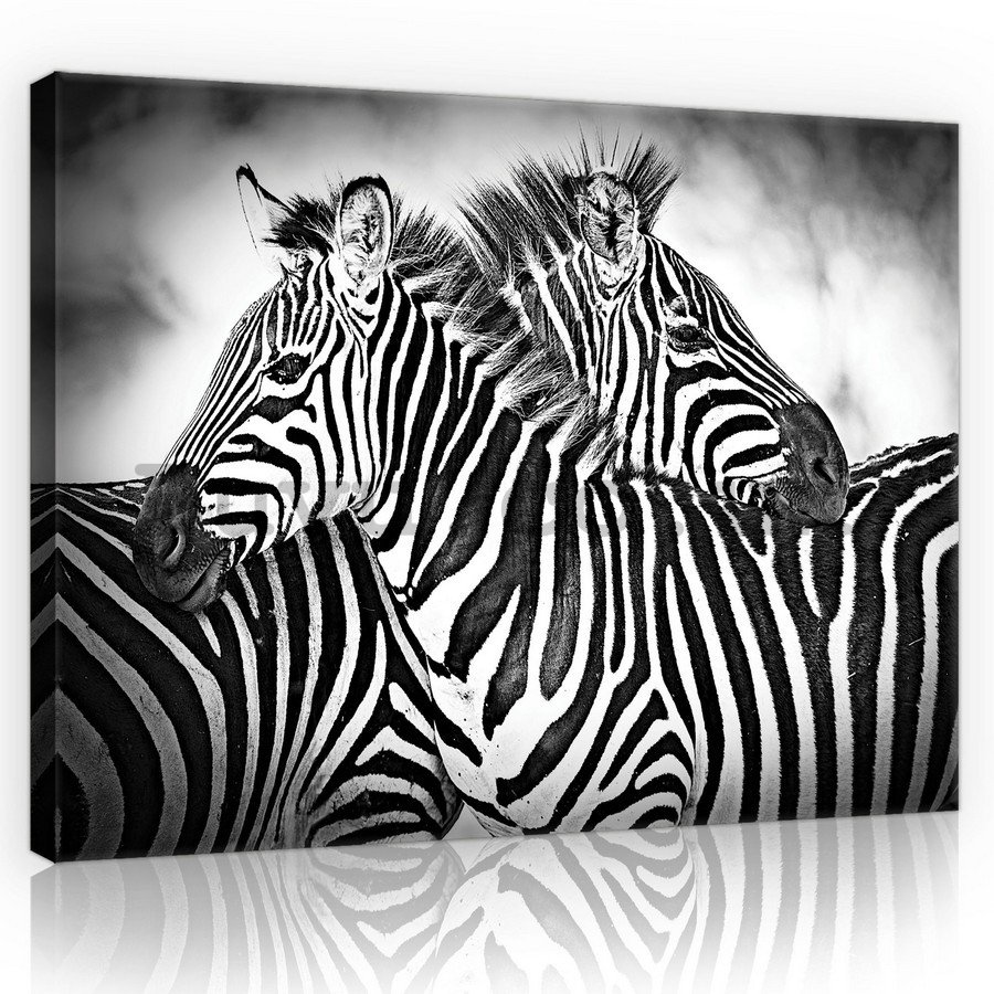 Painting on canvas: Zebra (1) - 75x100 cm
