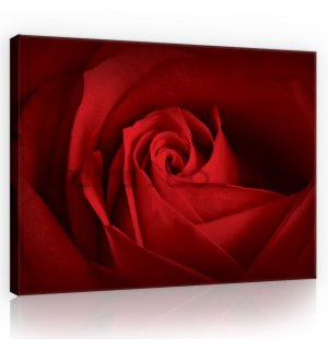 Painting on canvas: Detail of red rose - 75x100 cm