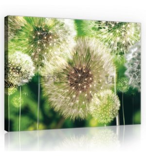 Painting on canvas: Dandelions - 75x100 cm