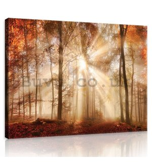 Painting on canvas: Forest dawn - 75x100 cm