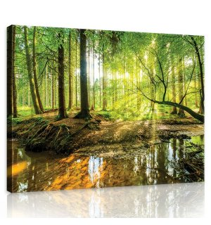 Painting on canvas: Floodplain forest - 75x100 cm
