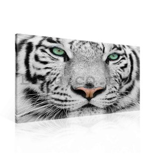 Painting on canvas: White Tiger - 75x100 cm