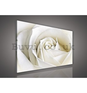 Painting on canvas: White Rose (2) - 75x100 cm