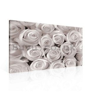 Painting on canvas: White rose - 75x100 cm