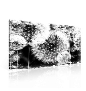Painting on canvas: Dandelions (black and white) - 75x100 cm