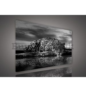 Painting on canvas: Jaguar (black and white) - 75x100 cm