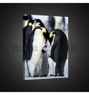 Painting on canvas: Emperor penguins (1) - 75x100 cm