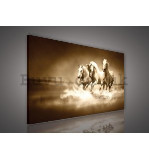 Painting on canvas: Horses (4) - 75x100 cm